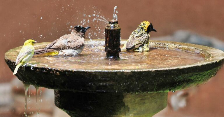 Tips to attracting birds to bird bath - Easy and Simple way in 2021