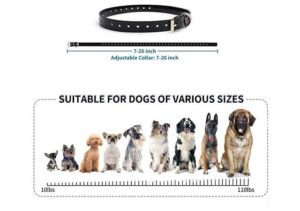 Best Dog Training Collar for small dog with Remote1